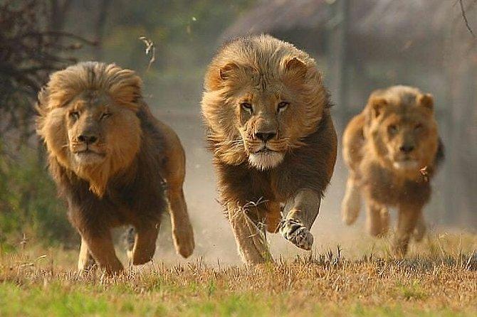Private 3 Day Luxury Wildlife Migration Safari