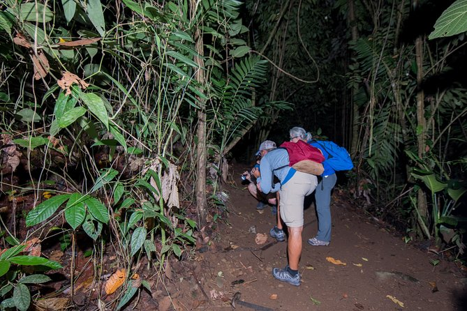 Rainforest Night Walk with Hotel Pickup in La Fortuna