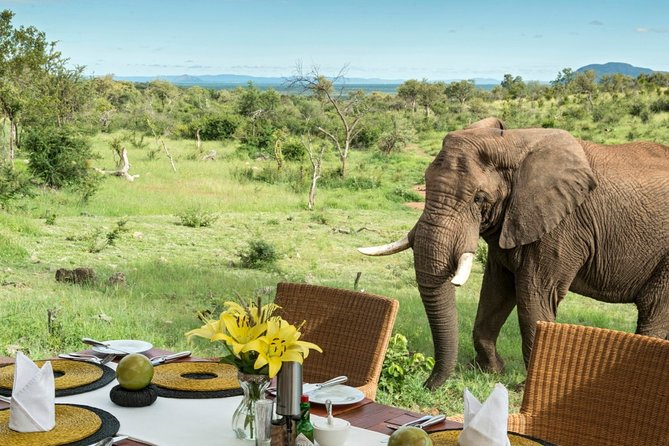 4-Day Private Guided Safari Tour of Madikwe with Meals