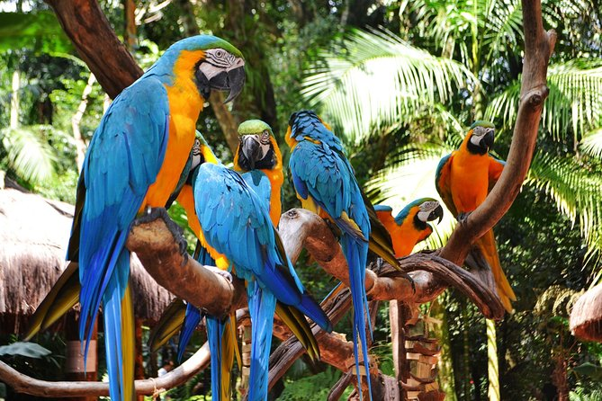 Brazilian Side Falls: Brazilian Falls Tour with Parque Das Aves: