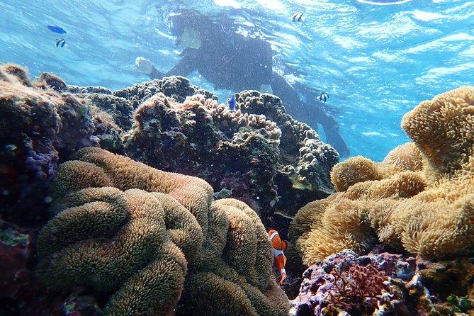 [Okinawa Miyako] Natural Aquarium! Tropical Snorkeling with colorful fish!