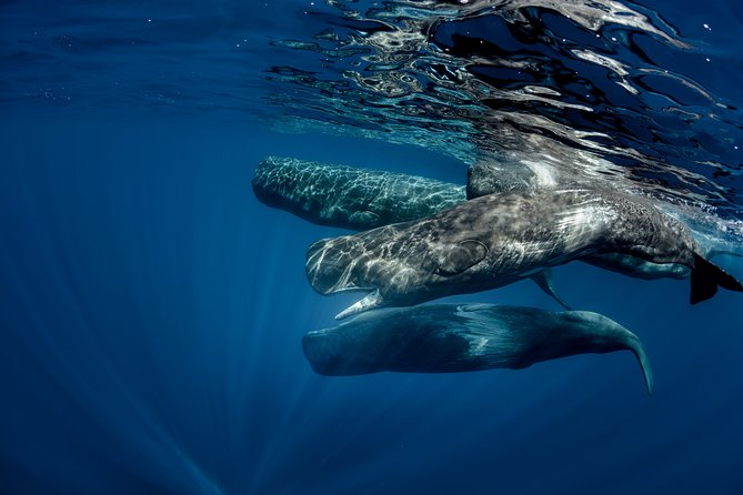 Mirissa Whale Watching Private Day Trip from Colombo or Negombo