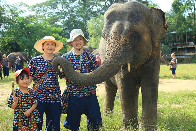 Chiang Mai Single Day Visit to Elephant Nature Park (No Riding)