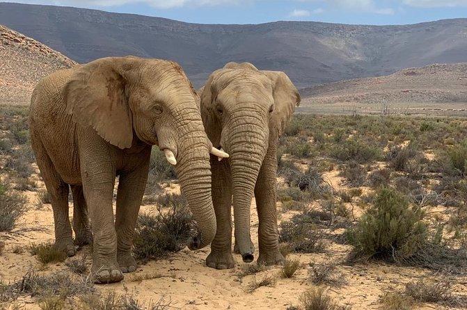 Private Overnight Wildlife Safari From Cape Town
