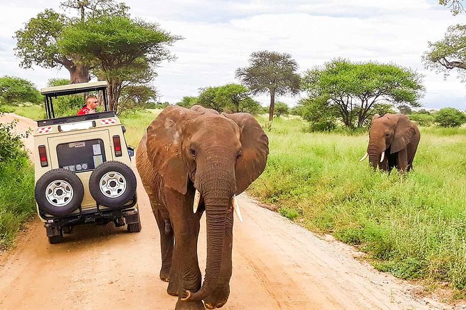 14 Days Private Safari in Kenya and Tanzania from Nairobi