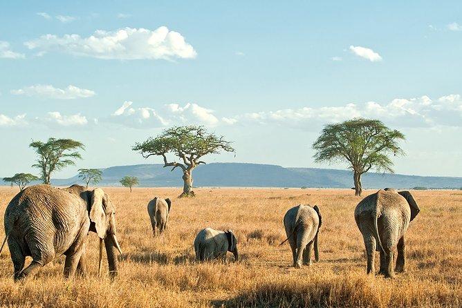 9-Day Taste of Kenya Wildlife Luxury Safari