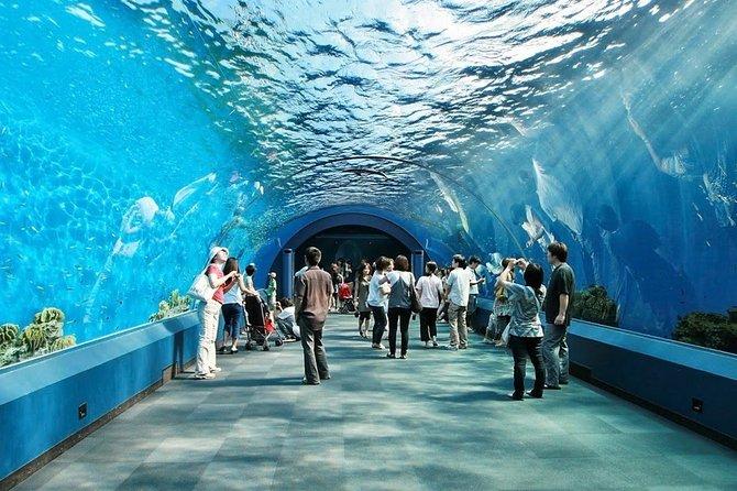 Pattaya Underwater World Admission Ticket with Return Transfer