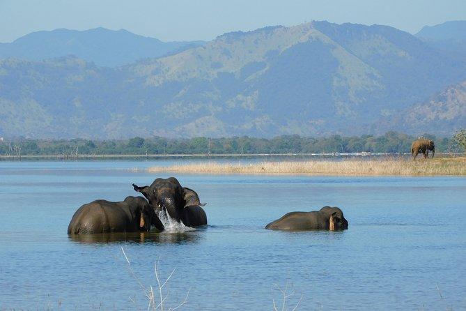 Udawalawe National Park 5 hours Morning Safari