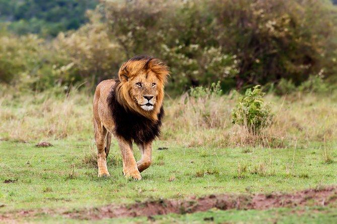 6 Days Safari of Kenya & Tanzania from Nairobi