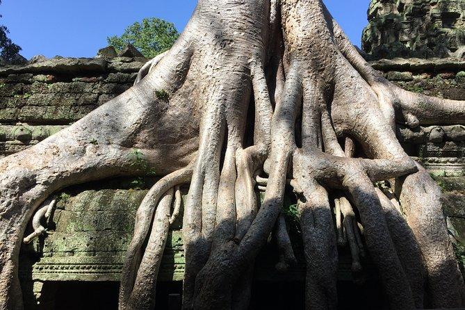 Private Half Day To Jungle Temple-Taprohm & Banteay Kdei Temples