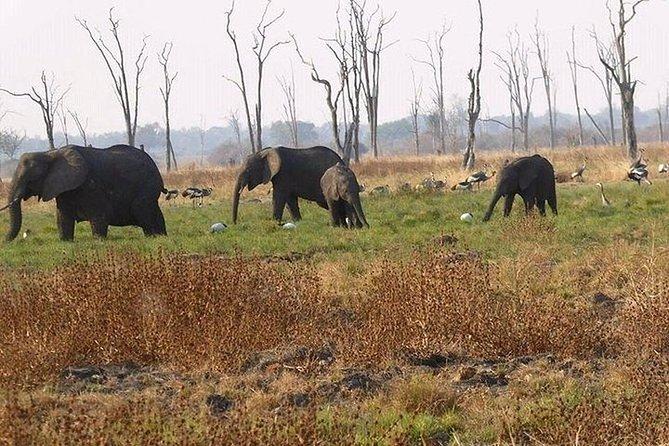 Full-Day Safari in Botswana from Zambia