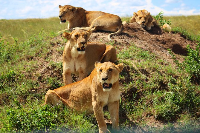 3-Day Amboseli National Park Safari Tour from Nairobi