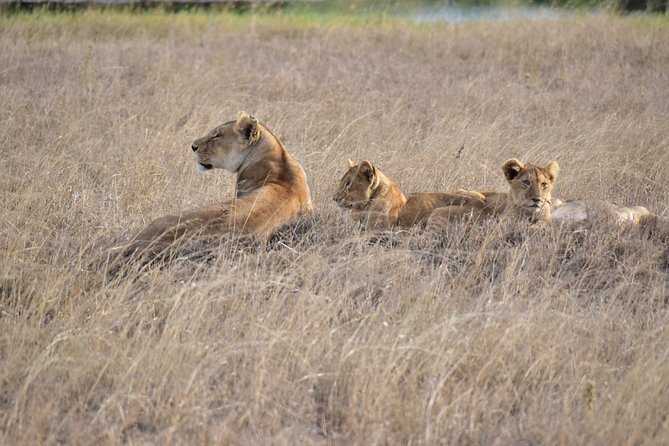 Serengeti - a World Heritage Safari - 6 Days