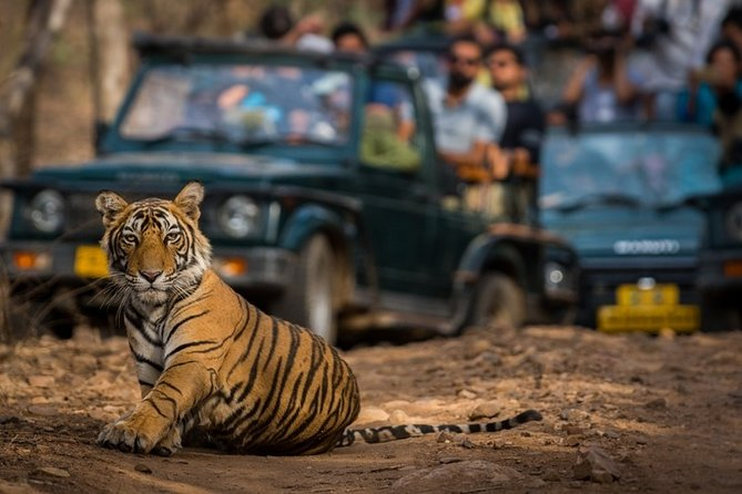 India 13-Day Private Wildlife Tour with Accommodation