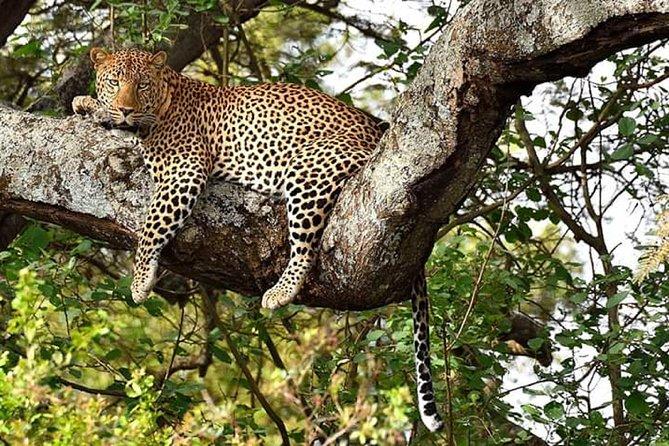 3-Day Meru National Park Private Guided Safari Tour