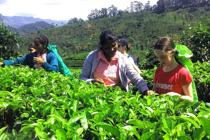 Village Tea, Full-Day Private Tour in Haputale with Lunch