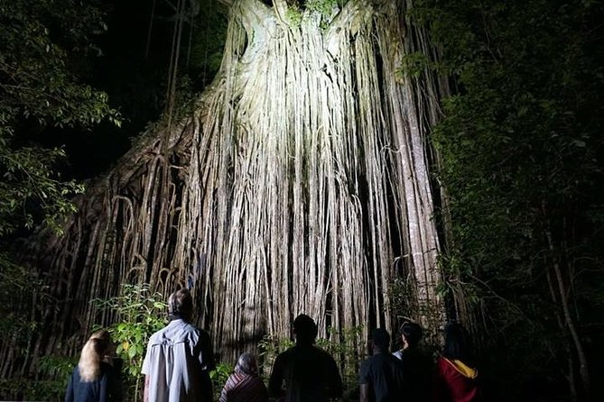 Rainforest & Nocturnal Wildlife Tour
