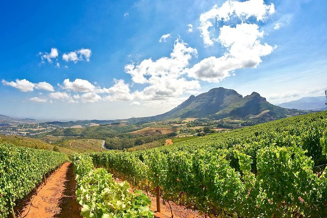 Full-Day Private Guided Cape Winelands Tour with Wine Tasting