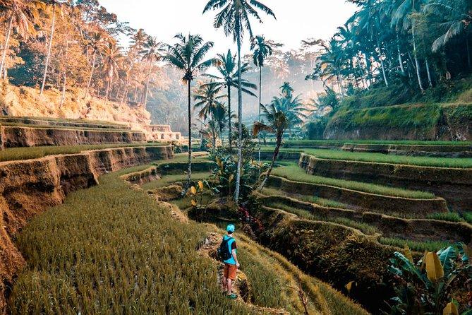 Bali Tour Tours
