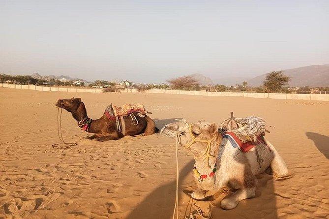 9-Day Private Safari Tour of Rajasthan Sum and Khuri Desert