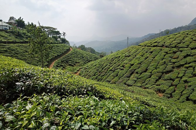 Munnar 3-Day Private Sightseeing Tour from Madurai
