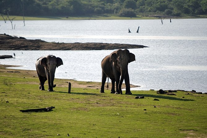 Half-Day Elephant Safari at Udawalawe National Park
