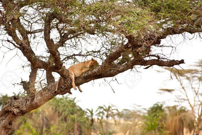 6-Day Serengeti Safari Adventure from Moshi or Arusha