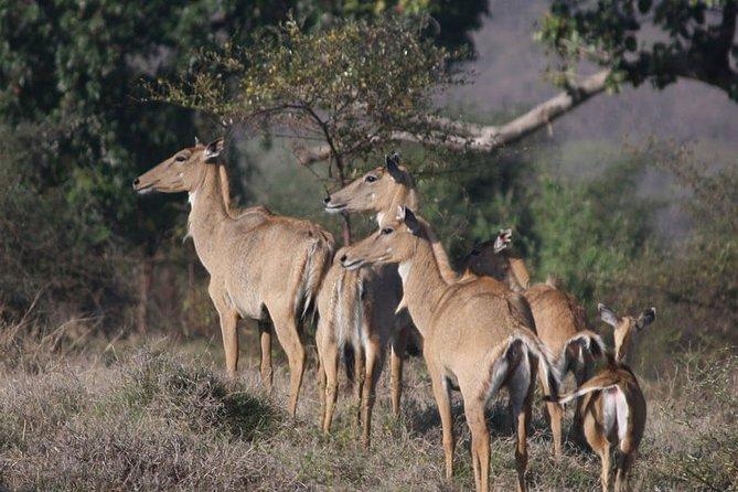 Private Safari Excursion to Panna National Park from Khajuraho
