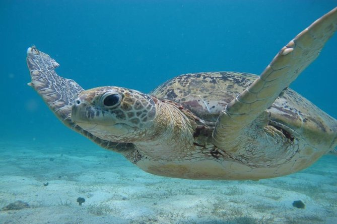 Snorkelling with Turtle Experience in Tiga Ruang