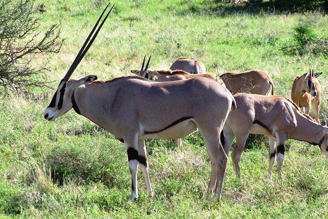 2-Days Safari to Tsavo East National Park and Taita Sanctuary