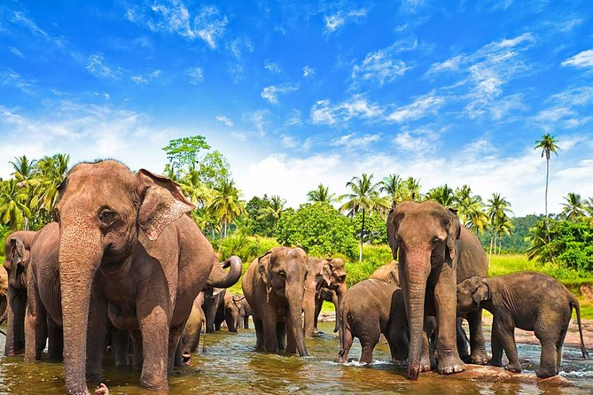 Udawalawe National Park Full-Day Safari from Ella
