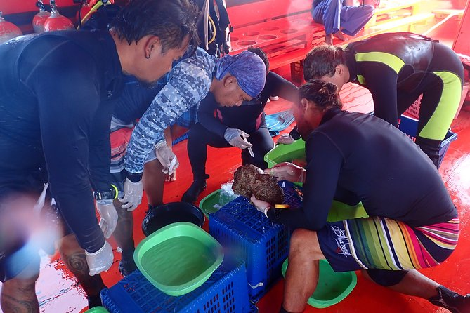 2-Day Coral Propagation Course in Koh Chang with Hotel Pickup