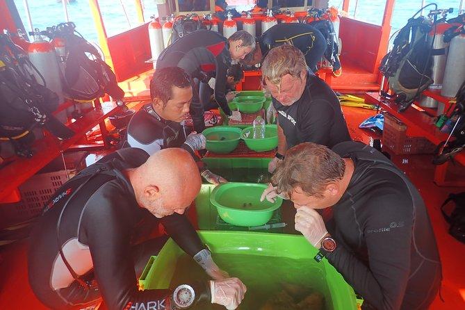 Coral propagation Course Koh Mak / Ocean Quest Sea Shepherd