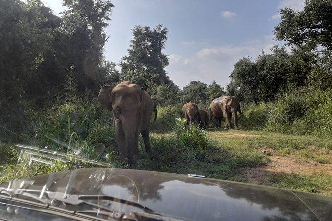 Rangiri Jeep Safari Sigiriya Lion Rock & Evening Jeep Safari
