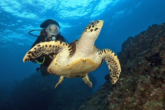 Underwater Explorations of Phi Phi Islands