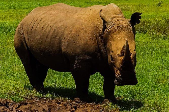2-Day Ol Pejeta Conservancy Guided Safari Tour from Nairobi