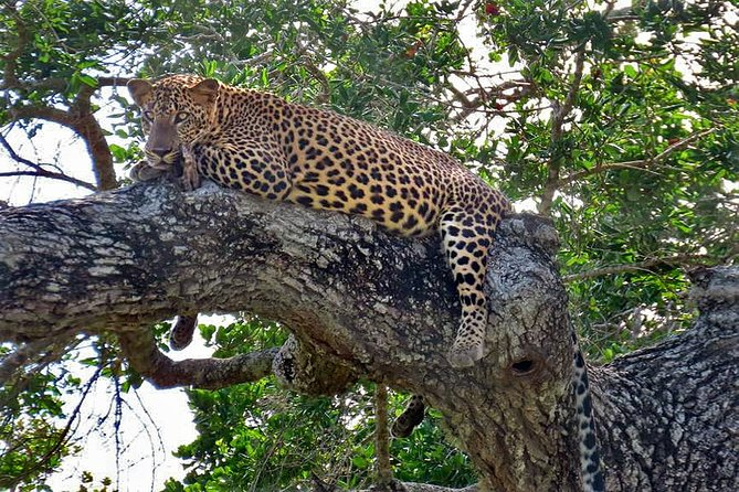 Full-Day Safari in Yala National Park from Tangalle