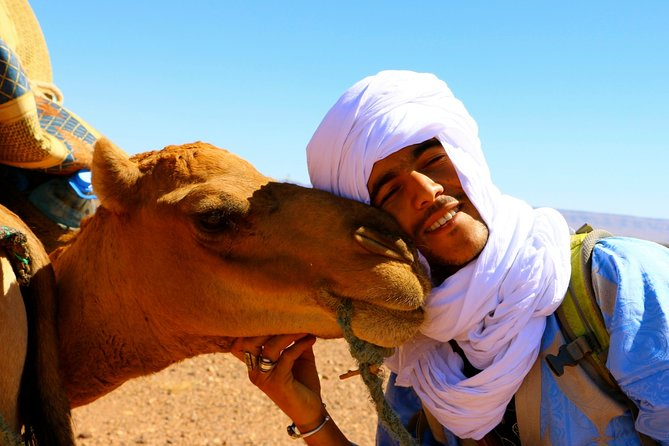 Private Day Camel Trekking Tour in Draa Valley from Zagora