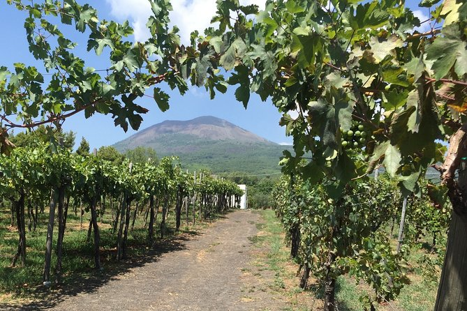 Private Guided Wine Tasting Experience in Vesuvius with Lunch