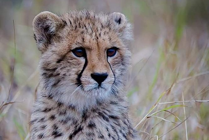The Ann van Dyk Cheetah Guided Tour