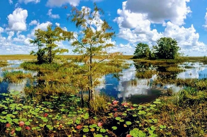 1-Hour Air boat Ride and Nature Walk with Naturalist in Everglades National Park