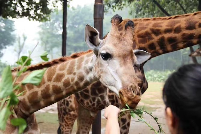 Private Day Tour to Chimelong Safari and Circus Show in Guangzhou