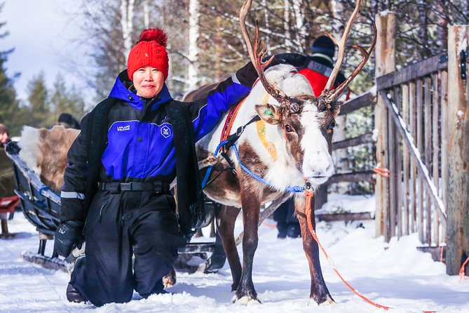 Visit a Reindeer Farm with Short Sleigh Ride