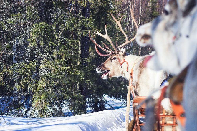 Visit a Reindeer Farm and One Hour Safari