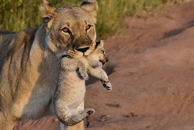 Kruger national park overnight safari 3 days/2 night