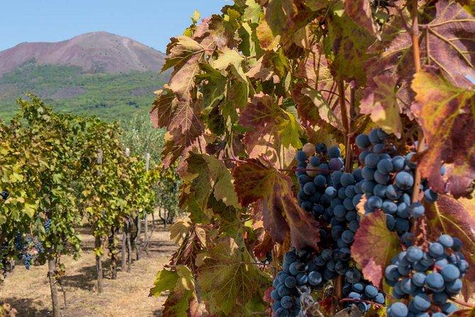 Vesuvius and Wine Tasting Experience