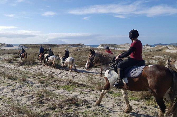 Matakana Art & Horse Riding Experience