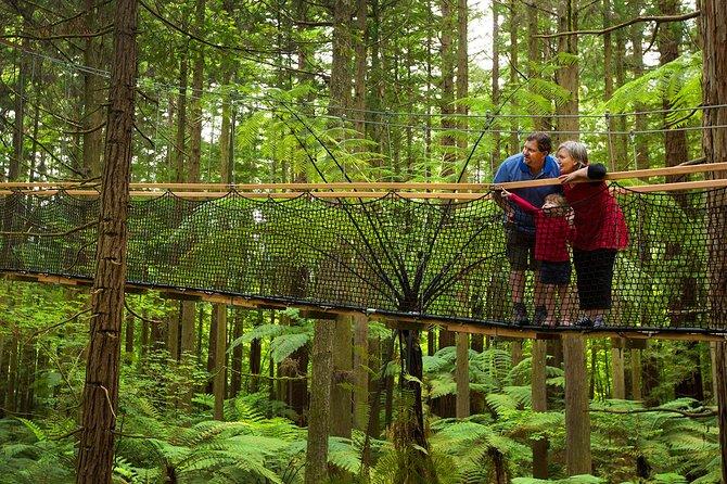 Redwoods Daytime Treewalk Experience
