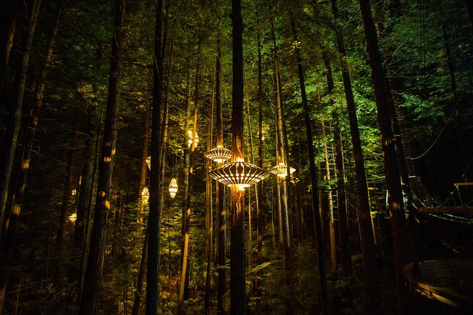 Redwoods Nightlights Experience