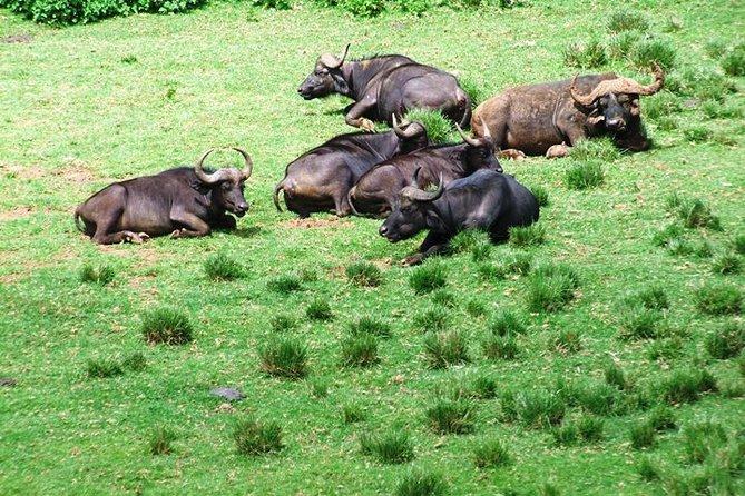 6 Days:Aberdares - Lake Bogoria- Lake Baringo -Lake Nakuru -Masai Mara Safari